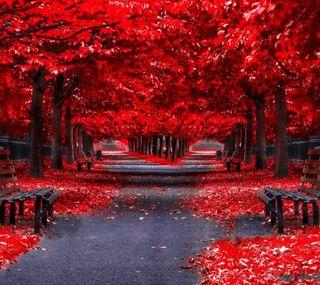 Обои на телефон осень, природа, красые, деревья