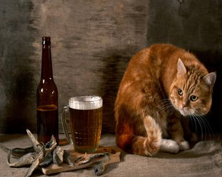 Обои на телефон пиво, напиток, кошки