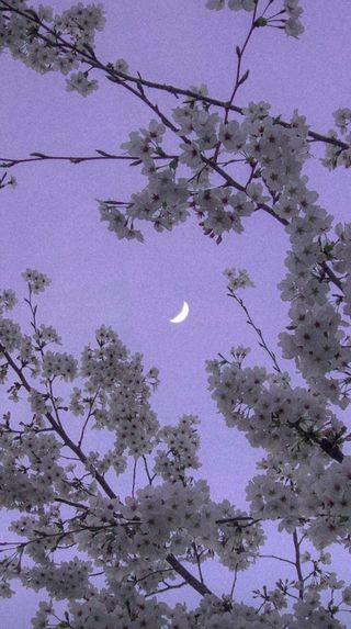 Обои на телефон фиолетовые, цветы, небо, милые