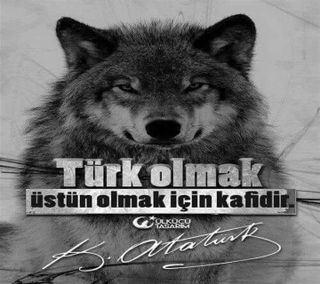 Обои на телефон ататюрк, турецкие, волк, mhp, bozkurt