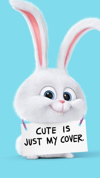 Обои на телефон кролики, фото, секрет, опасные, милые, жизнь, rabbit secret life