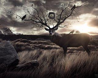 Обои на телефон олень, фантазия, креативные, животные