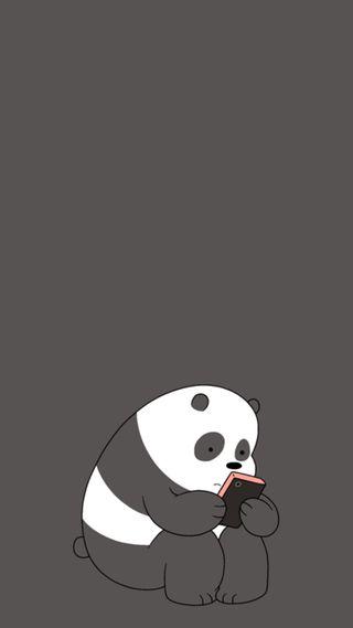 Обои на телефон полярный, панда, pardo, oso, escandaloso