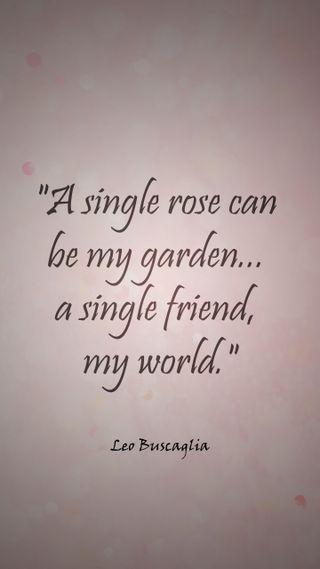 Обои на телефон дружба, цитата, сад, розы, мой, мир, друг, friend my world, buscaglia
