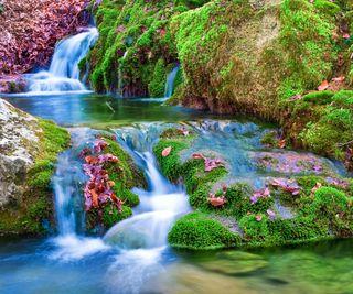 Обои на телефон hd, природа, цветы, пейзаж, лес, весна, река, водопад