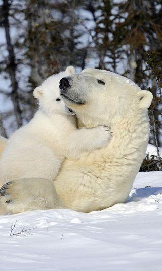 Обои на телефон полярный, милые, медведь, son, polar bear, mon