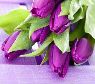 Обои на телефон тюльпаны, цветы, фиолетовые, весна