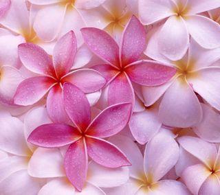 Обои на телефон лепестки, цветы, розовые, приятные, природа, прекрасные, новый