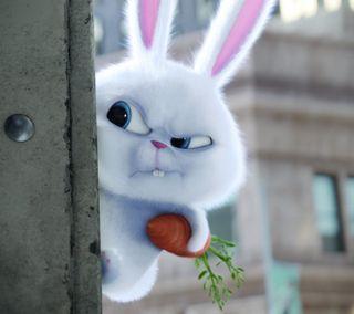 Обои на телефон аниме, забавные, череп, кролик