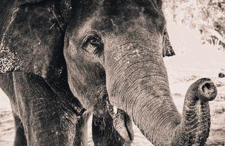 Обои на телефон черно белые, слон, природа, животные