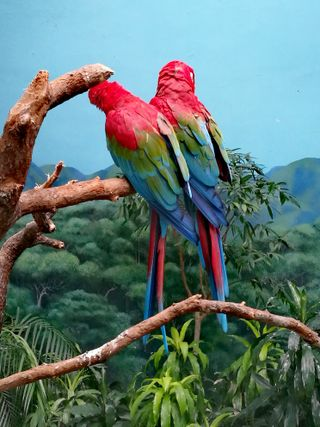 Обои на телефон попугай, природа, попугаи