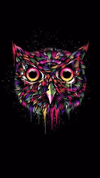 Обои на телефон сова, черные, красочные, owl colorful