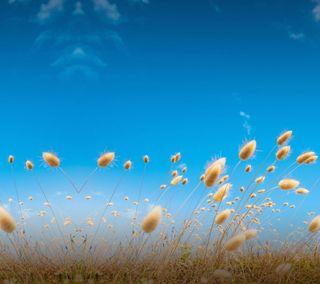 Обои на телефон трава, смысл, пшеница, поле, one, m9, htc