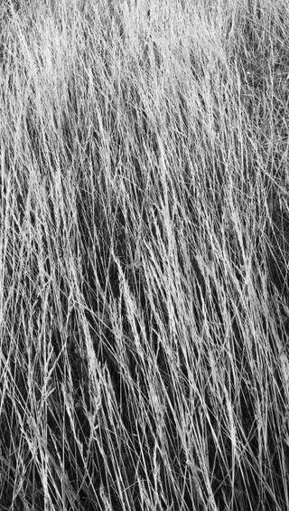Обои на телефон черные, черно белые, трава, осень