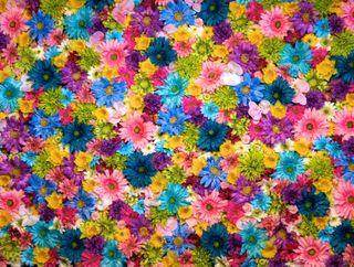 Обои на телефон желтые, цветы, фиолетовые, синие, розовые, зеленые