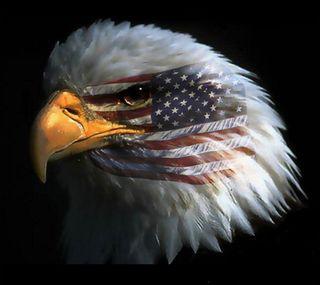 Обои на телефон флаг, сша, синие, патриот, орел, красые, белые, американские, usa, american eagle