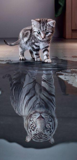 Обои на телефон тигр, ночь, мечта, кошки, котята, коты, вместе, good, big