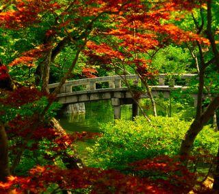 Обои на телефон мост, цветы, природа