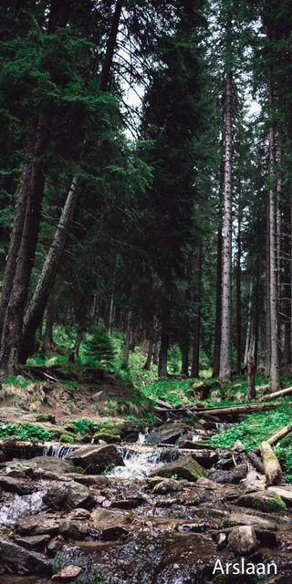 Обои на телефон приключение, прекрасные, листья, лес, дерево, вода