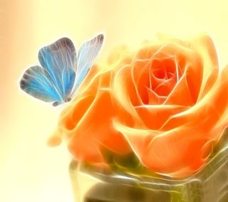 Обои на телефон свежие, розы, прекрасные, оранжевые, крутые, бабочки, абстрактные
