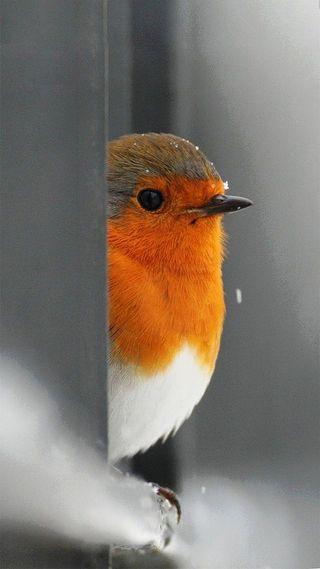 Обои на телефон питомцы, птицы, оранжевые, милые, зима, животные, дерево, белые, floradam