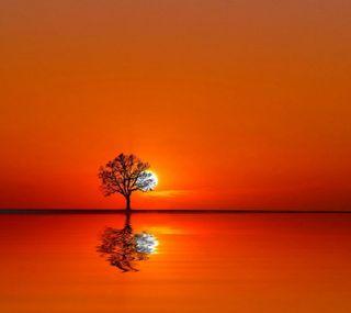 Обои на телефон оранжевые, природа, закат