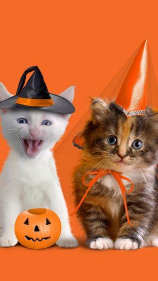 Обои на телефон коты, хэллоуин, котята, другие, halloween kitty