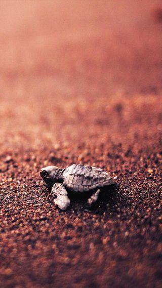 Обои на телефон черепаха, песок