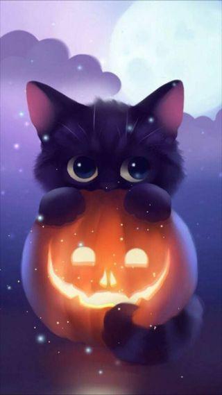 Обои на телефон судьба, череп, хэллоуин, тыква, страшные, охотник, мир, милые, кошки, ведьма, stay, cute pumpkin cat