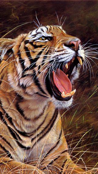Обои на телефон злые, тигр, лицо