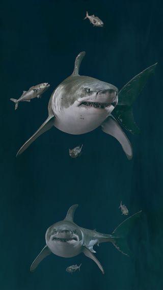 Обои на телефон акула, requin