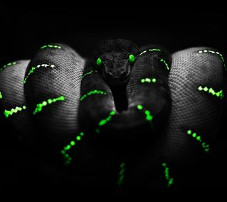 Обои на телефон boa, note3, python, razer, s4, sreefu, black green snake, черные, крутые, зеленые, змея, полосы, кобра
