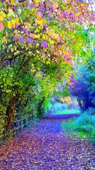Обои на телефон вид, цветы, приятные, природа, прекрасные, крутые, дорога, деревья