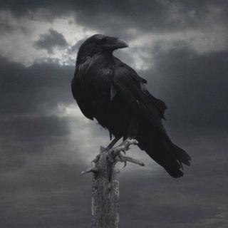 Обои на телефон викинги, черные, рагнар, птицы, орел, крылья, животные, ворона, prey