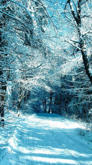 Обои на телефон мороз, лес, зима