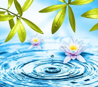 Обои на телефон лотус, цветы, вода, абстрактные, water flowers, lotus flowers