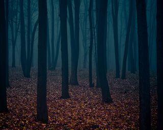 Обои на телефон туман, природа, пейзаж, лес, деревья, mysterious fog