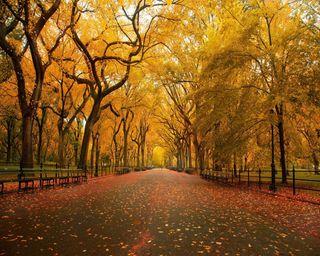 Обои на телефон упавший, сезон, осень, листья, желтые, дорога, дерево, autumn road