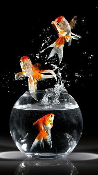 Обои на телефон брызги, рыба
