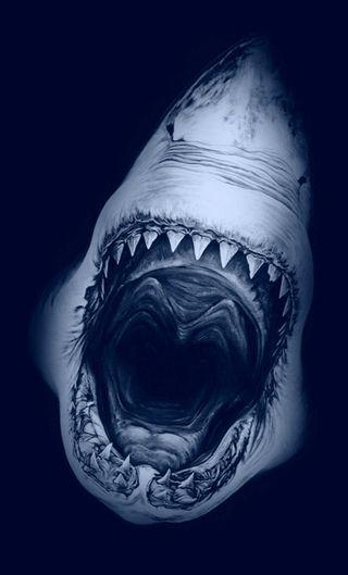 Обои на телефон акула, рыба, море