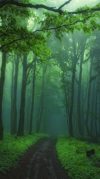 Обои на телефон лес, природа