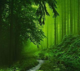 Обои на телефон глубокие, природа, листья, лес, зеленые, деревья, вода, deep forest, creek