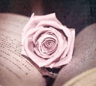 Обои на телефон книга, розы, красые, винтаж