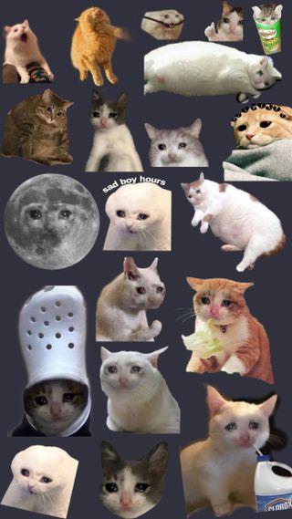 Обои на телефон коты, кошки, забавные, грустные, sad cats, crying