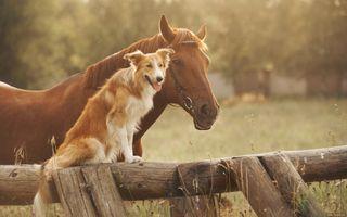 Обои на телефон лошади, собаки, приятные, природа, милые, животные, друзья