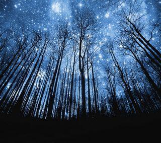 Обои на телефон сумерки, приятные, природа, ночь, новый, лес, звезда, естественные, деревья