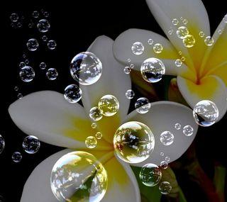 Обои на телефон сад, цветы, пузыри, абстрактные