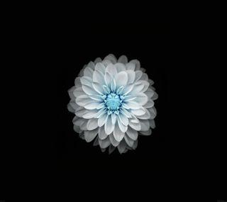 Обои на телефон лотус, черные, синие, приятные, прекрасные, белые