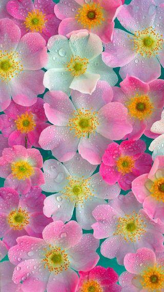 Обои на телефон неоновые, цветы, розовые