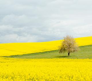 Обои на телефон природа, море, желтые, вдохновляющие, upload, sea of yellow, Nature